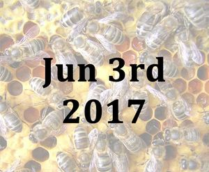 advanced beekeeping course